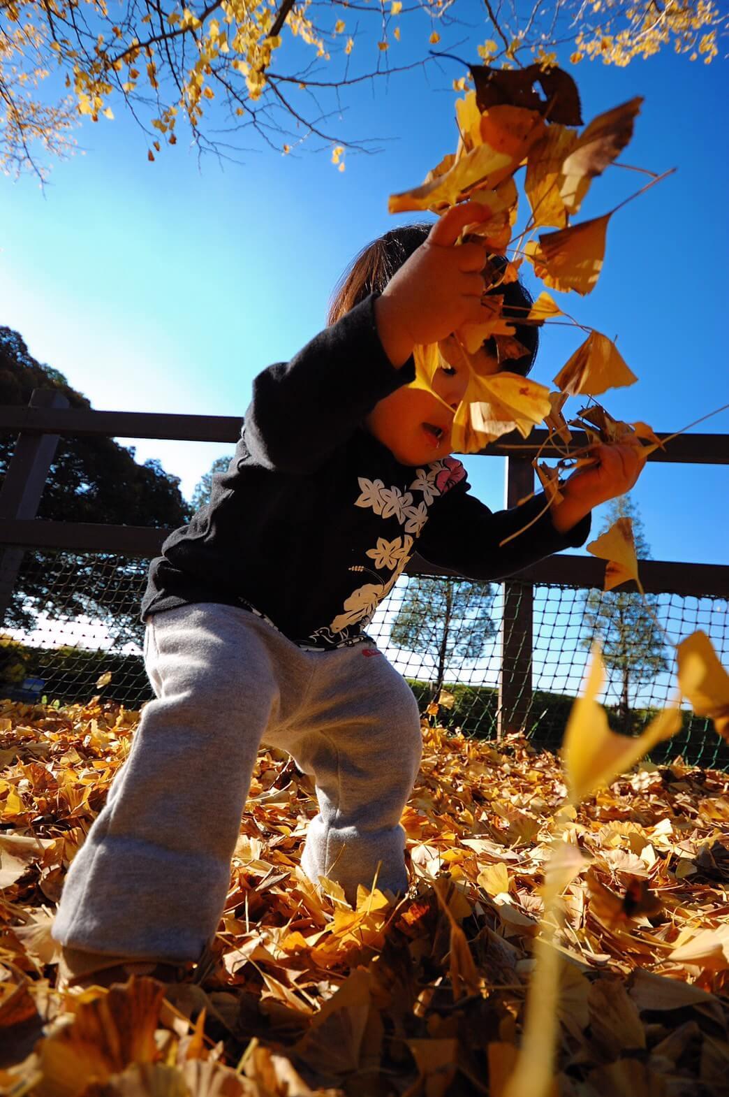 葉っぱが落ちてくる